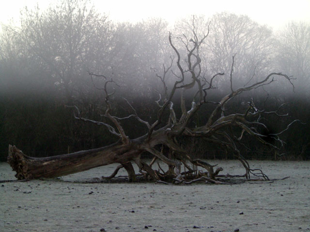 A picture of the fallen oak tree at Anstey Grove Barn bed and breakfast and self-catering accommodation in Hertfordshire